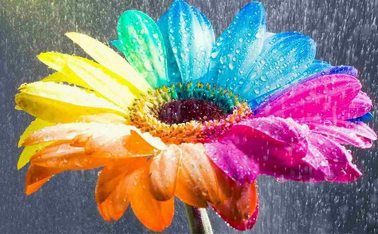 温变油墨:神奇的颜色变化师